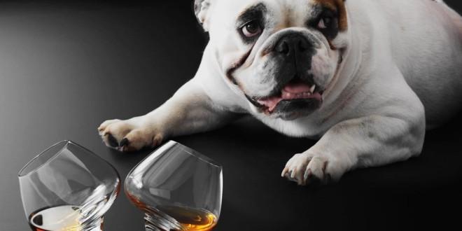 whisky brennen zu hause selbst herstellen tipps infos. Black Bedroom Furniture Sets. Home Design Ideas