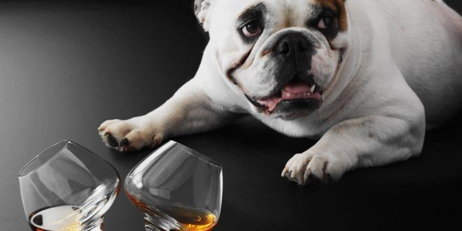 Whisky brennen Cognac Glas Set